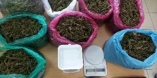 Συνελήφθησαν καλλιεργητές ναρκωτικών σε χωριό της Ηλείας