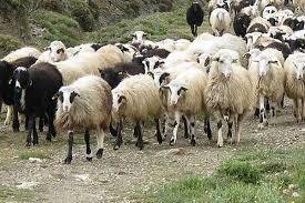 Διενέργεια ετήσιας απογραφής  εκμεταλλεύσεων  αιγοπροβάτων και χοίρων στην Ηλεία
